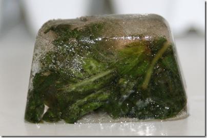 freezing basil