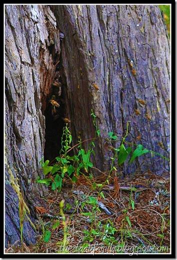 Sweet Springs Nature Preserve Los Osas