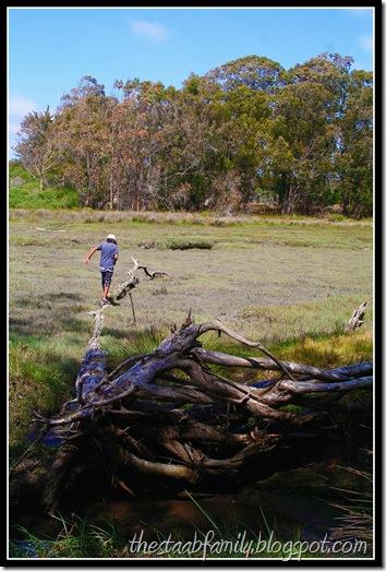 Sweet Springs Nature Preserve Los Osos