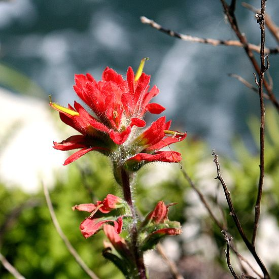 Partington Cove flowers