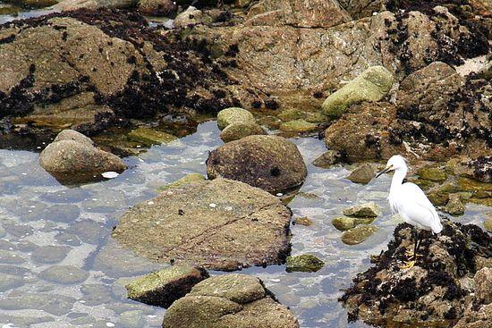Carmel Rock Pools
