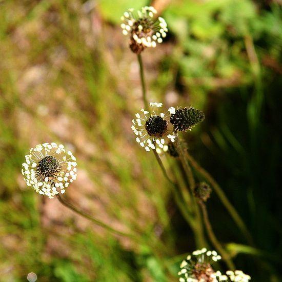 wildflowers Big Sur