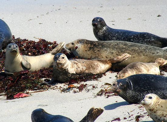Monterey Seals and Sea Lions
