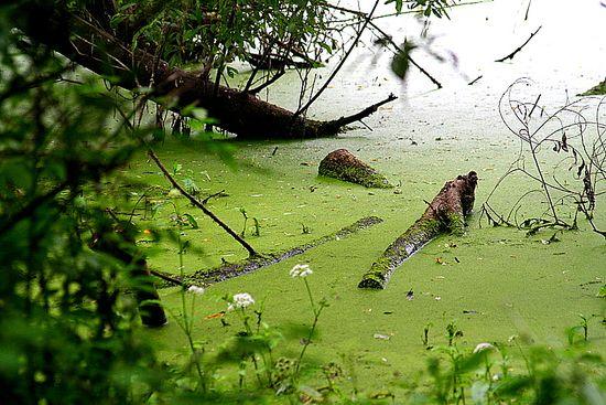 Frog Pond Wetland Preserve