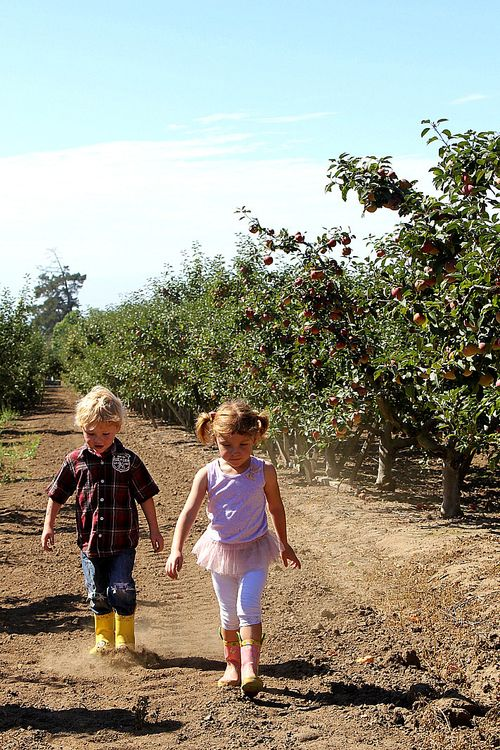 Apple Picking Central Coast