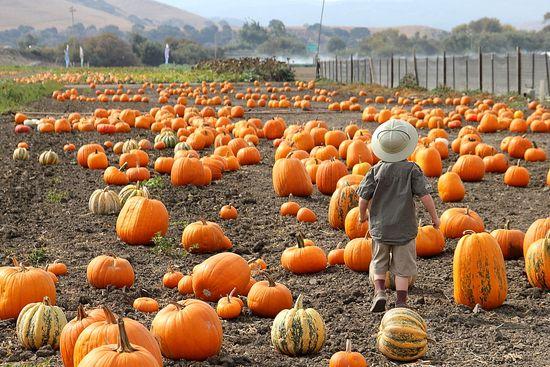 The Farm, Salinas