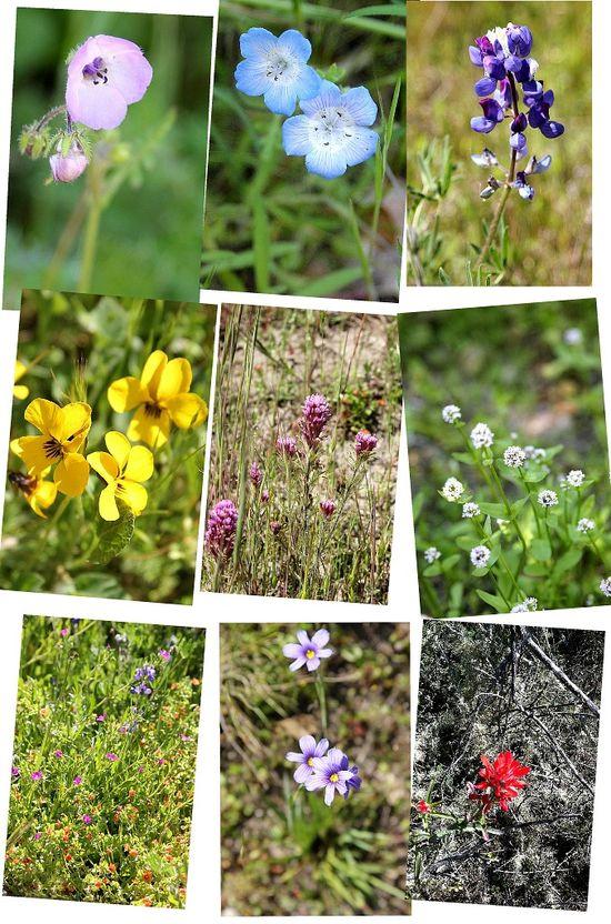 Toro Park Wildflowers