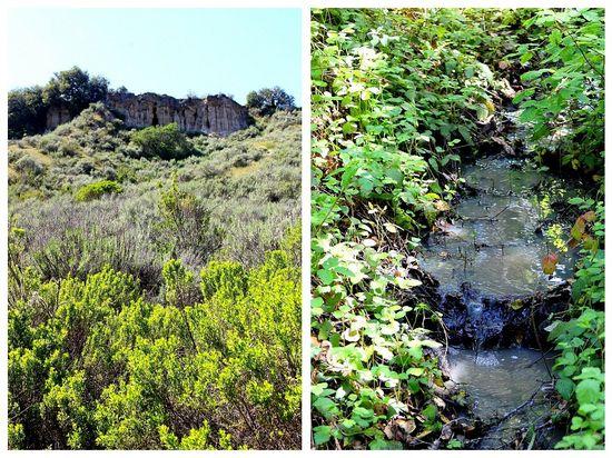 Toro Park California