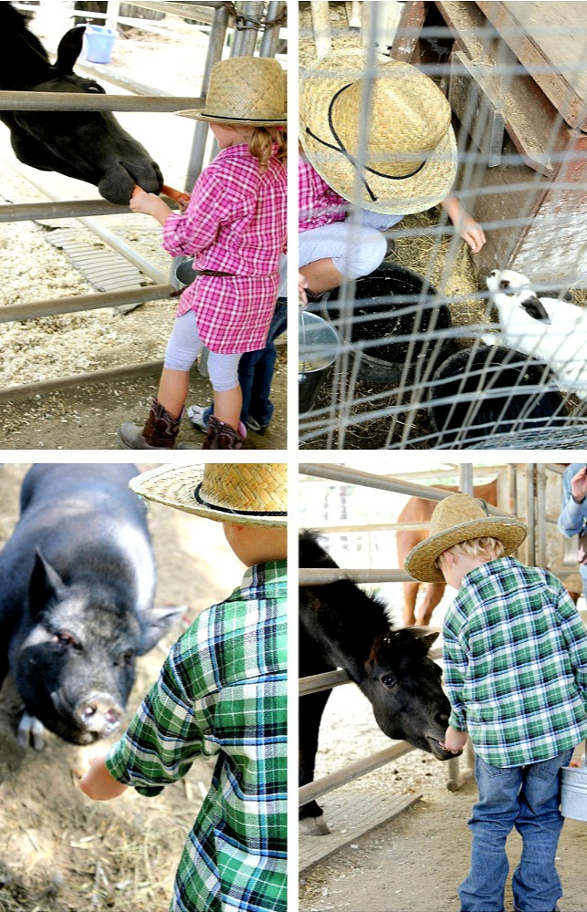 Petting zoo mega arte riding academy