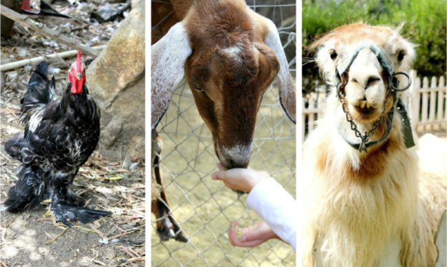 Petting zoo san diego