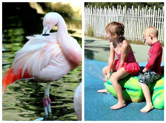 Safari Park water play