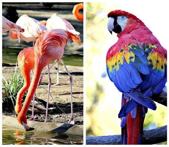 Birds at the San Diego Zoo