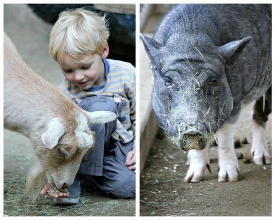 Petting zoo San Diego Zoo