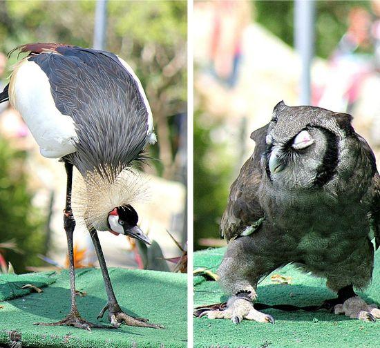 Safari park bird show