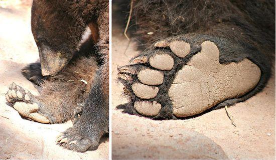 Bearizona Bears