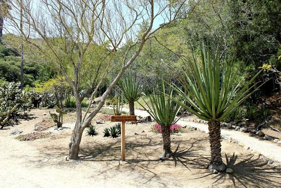 catalina botanical gardens