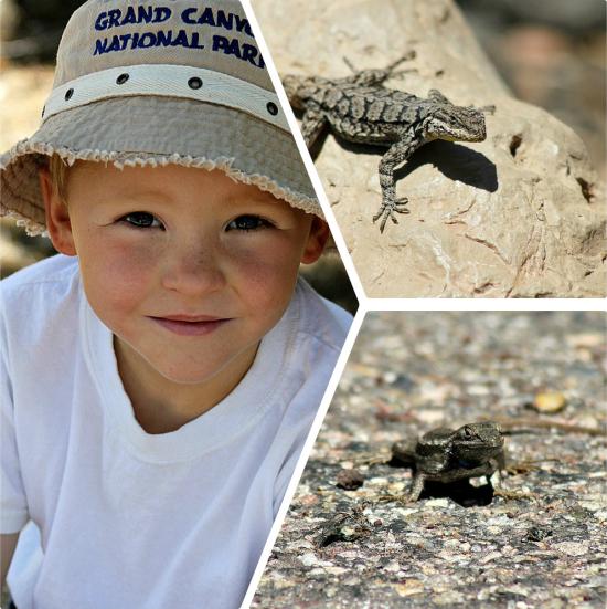 Grand Canyon lizards