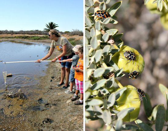 Collecting plankton at living coast