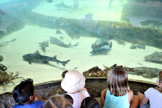 shark camp
