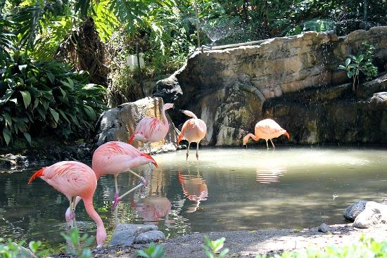 LA Zoo Flamingo