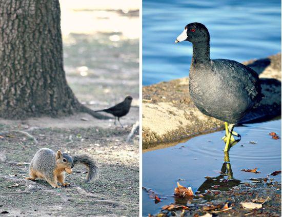 Lake Balboa wildlife