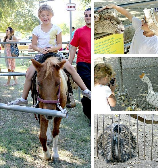 Fall Activities at Bates Nut Farm