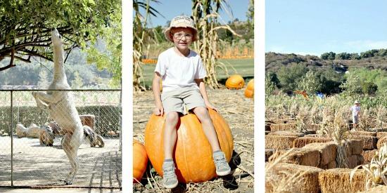 Bates Nut Farm San Diego
