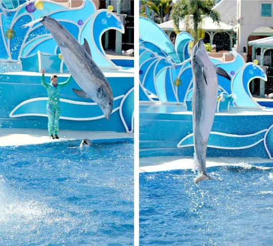 SeaWorld San Diego Dolphin show
