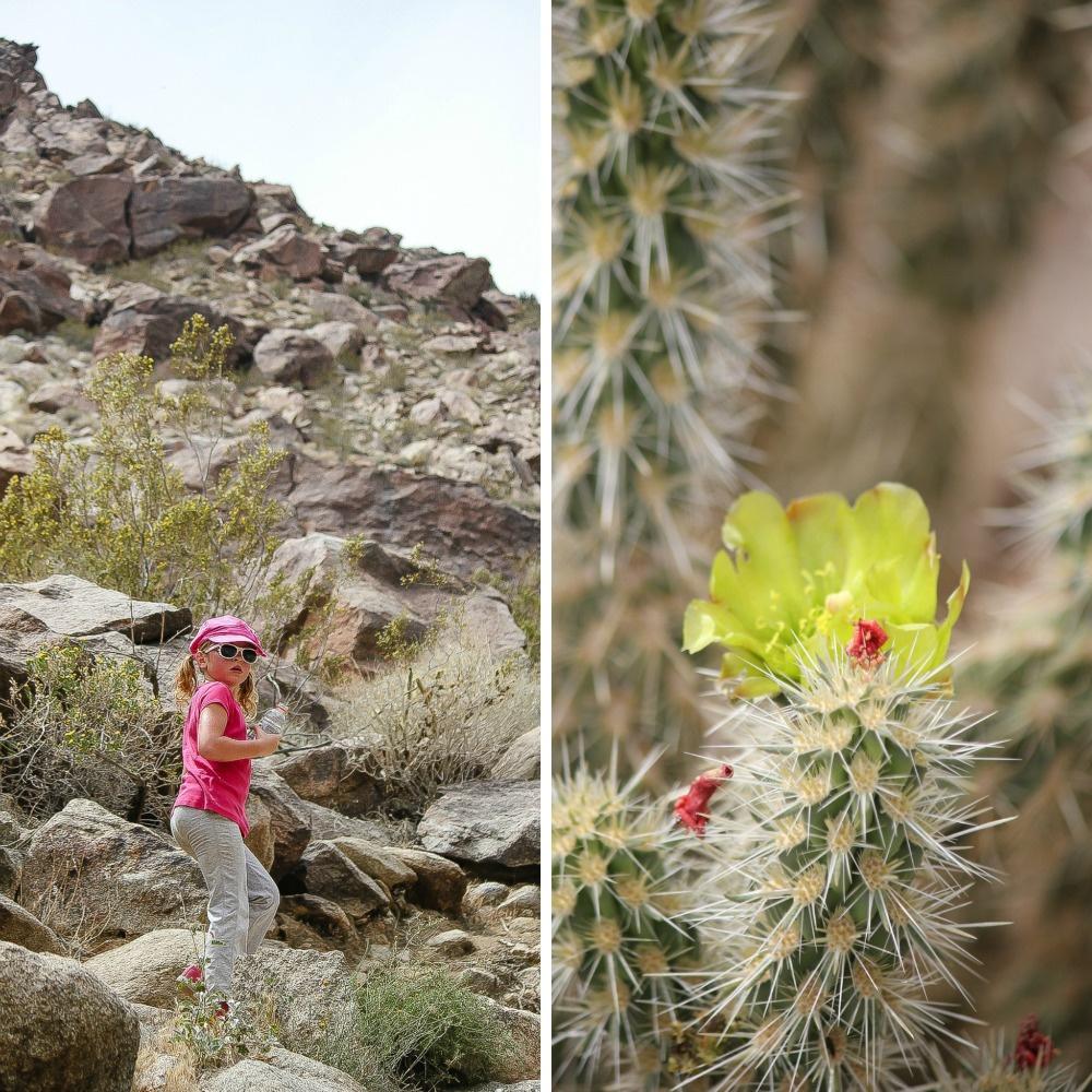 a girl walking on a desert trail and desert flowers