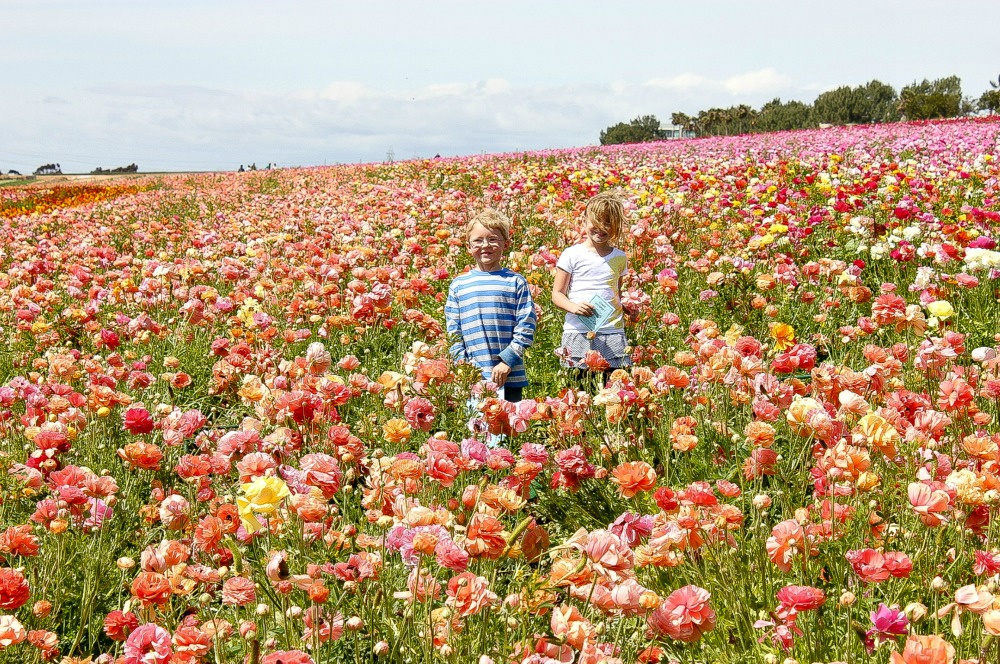 a girl and boy standing in a flower field