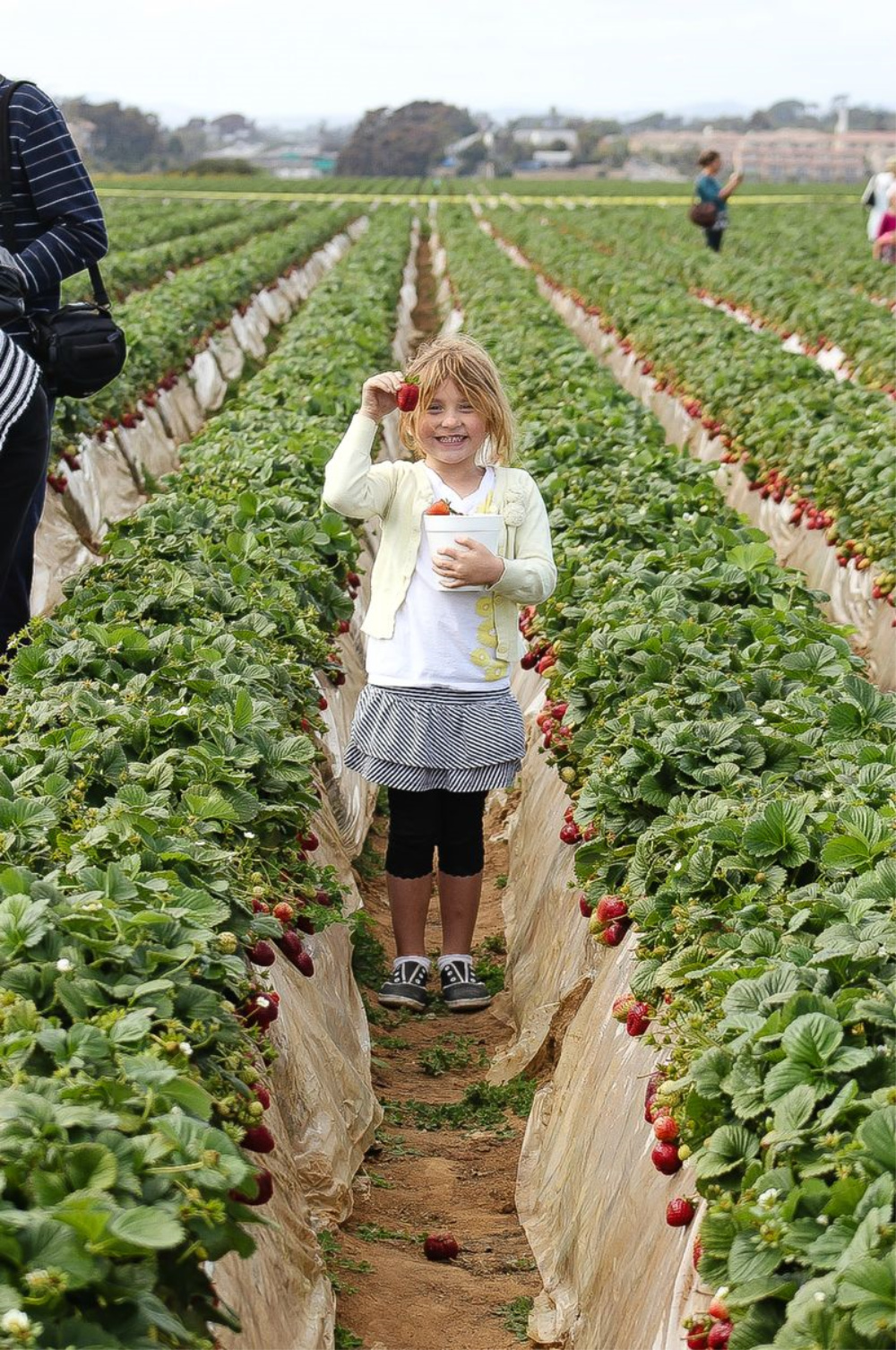 a girl picking strawberries at a strawberry field