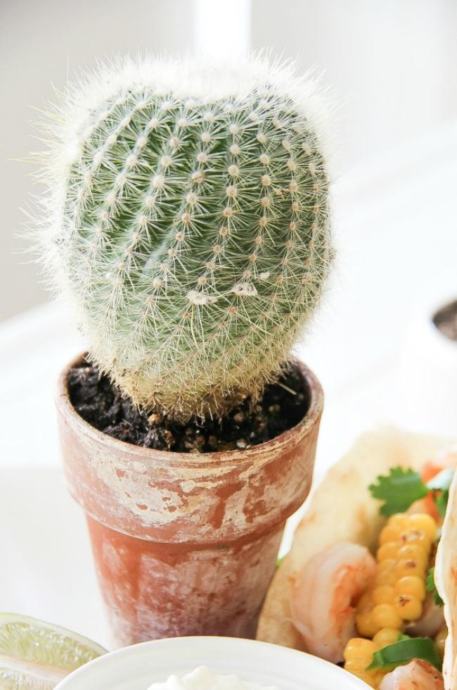 a round cactus in a terracotta pot