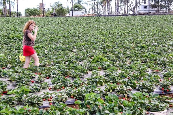 a girl walking through a strawberry field