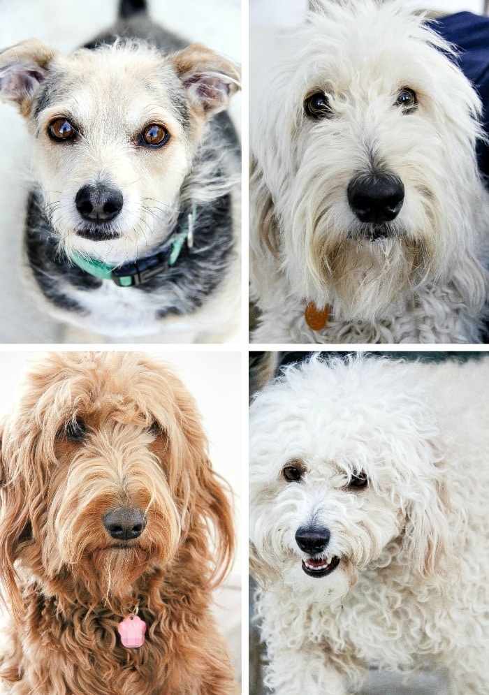 a collage of dogs