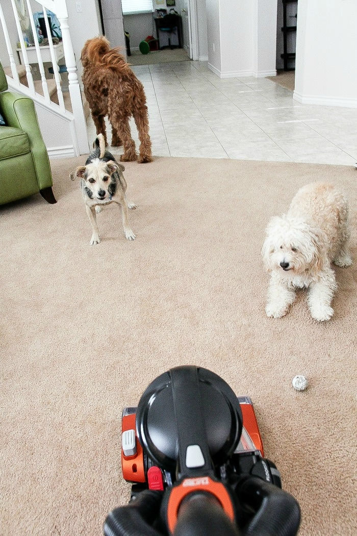 dogs barking at a vacuum cleaner