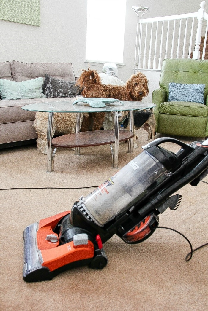 dogs hiding from a vacuum cleaner