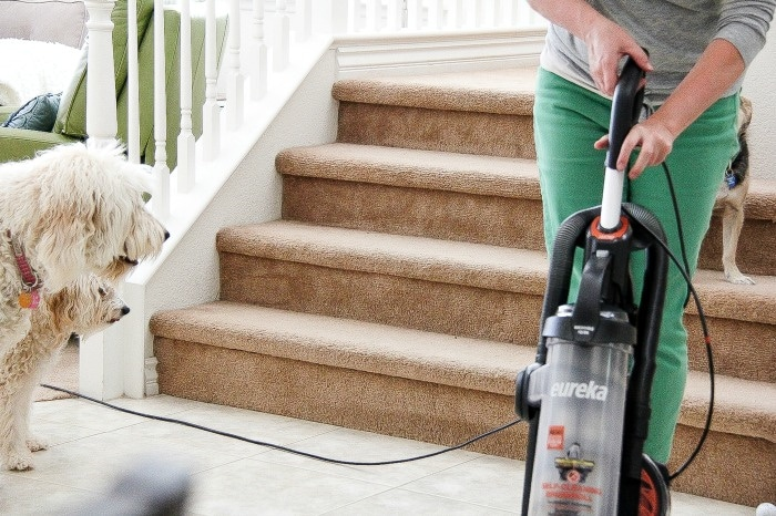 lady vacuuming while dogs stare at her