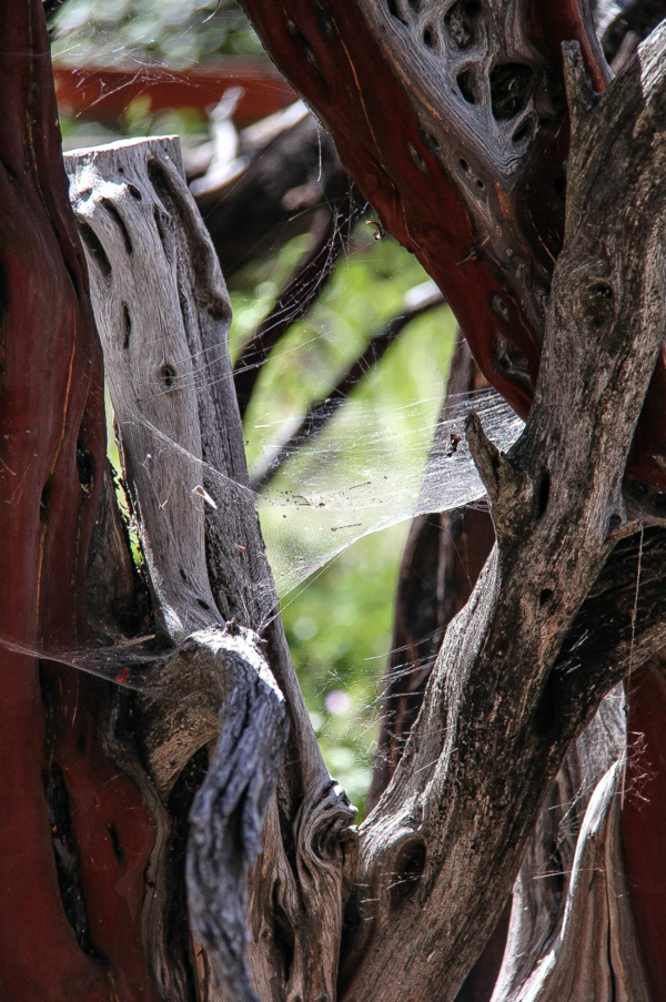 spiderweb between a tree