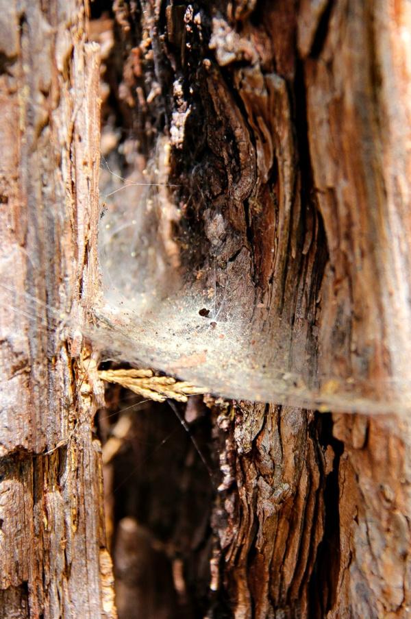 spiderweb in a tree