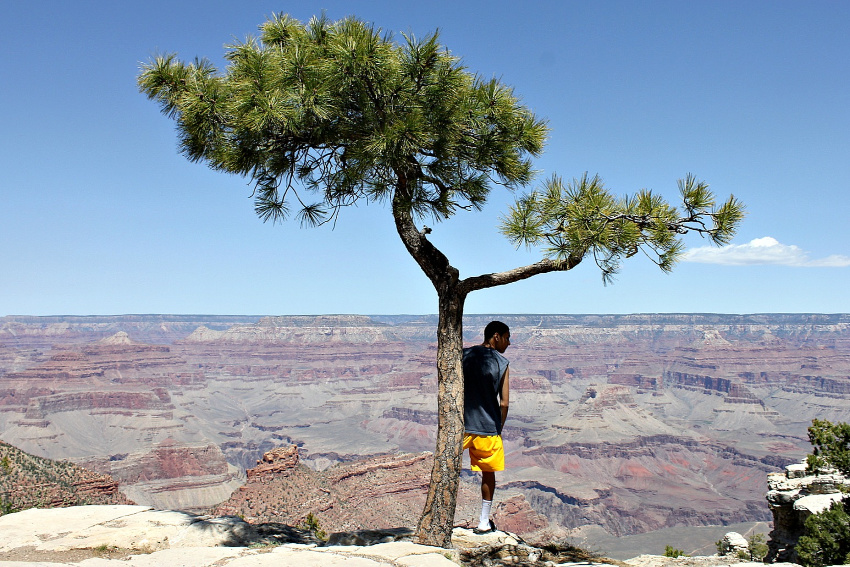 a teen standing by a tree overlooking the grand canyon