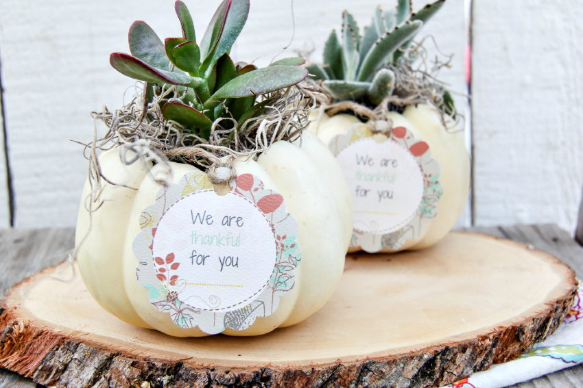 A succulent planted inside a white pumpkin with a gift tag attached.