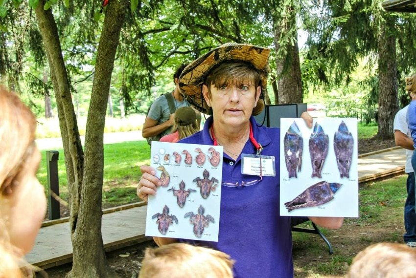 Kids learning about birds at Bernheim Arboretum and Research Forest in Kentucky.