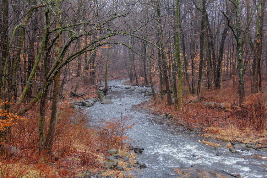 the Rahway River flowing through barren trees with red and orange brush on the ground in winter