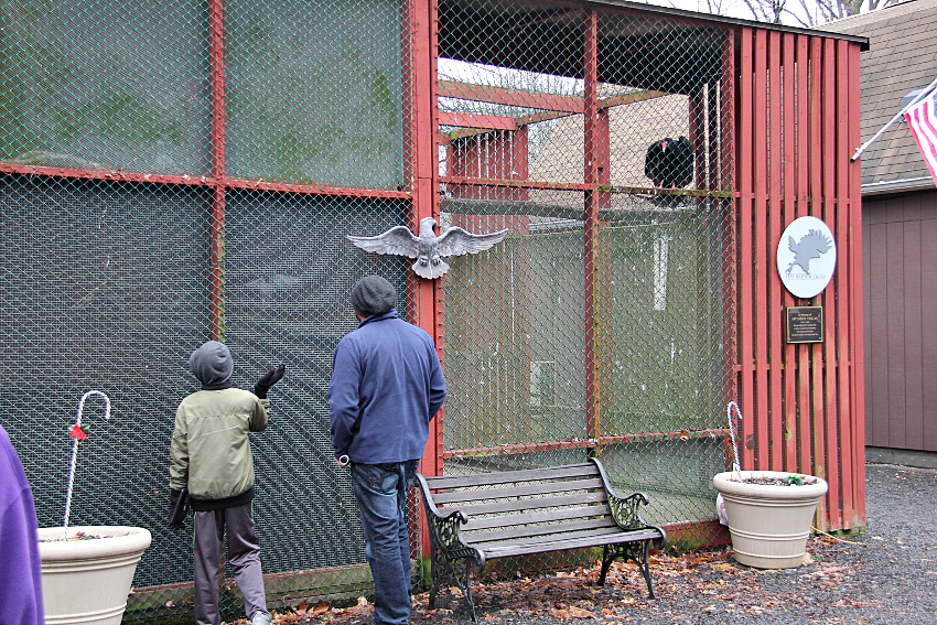 man and boy looking at birds at the raptor trust while a vulture watches them