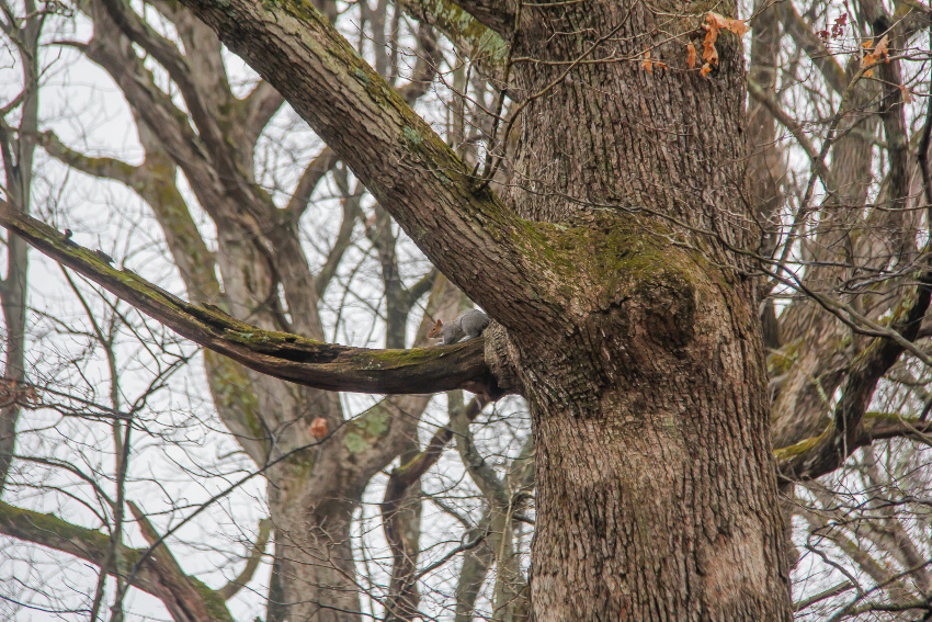 a squirrel on the branch of a barren tree in winter