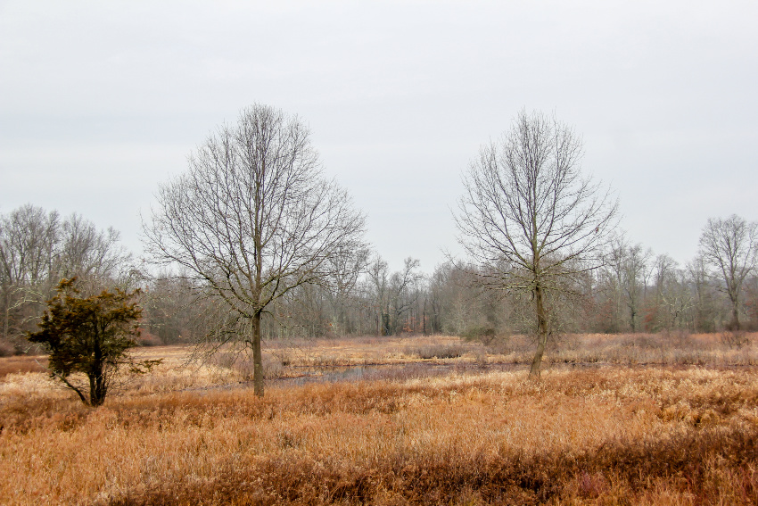 barren trees and swampland in new jersey in winter