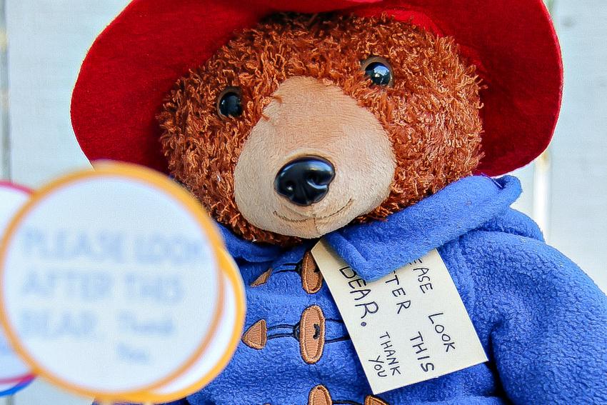 paddington teddy bear