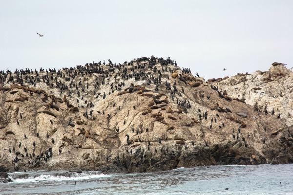 birds on a rock in the ocean