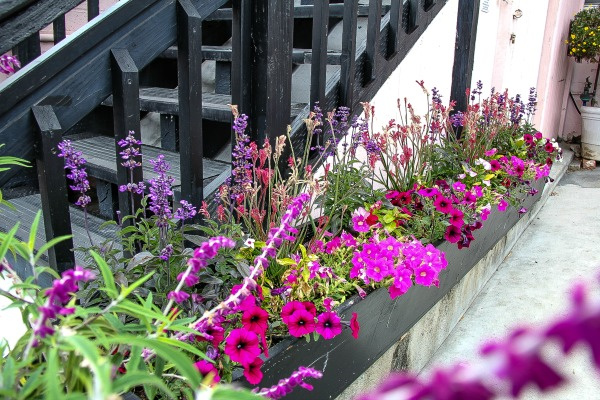 pink and purple flowers next to a black staircase