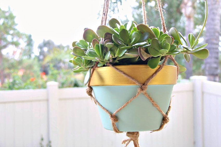 a succulent in a pale blue and gold pot inside a hanging macrame planter